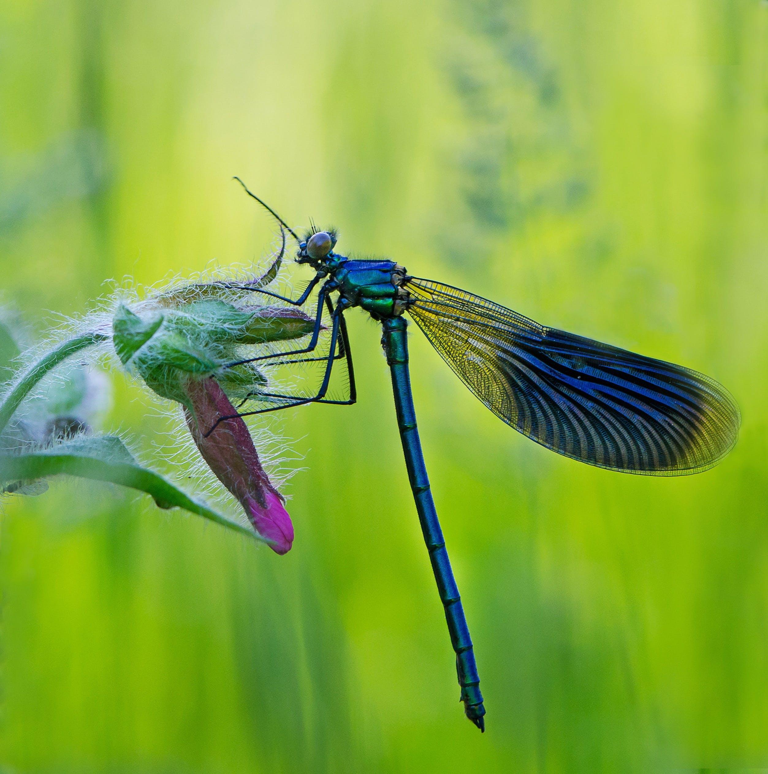 Free stock photo of nature, insects, ważka