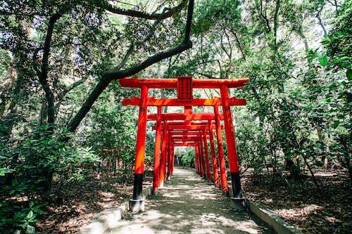 Orange Wooden Gates