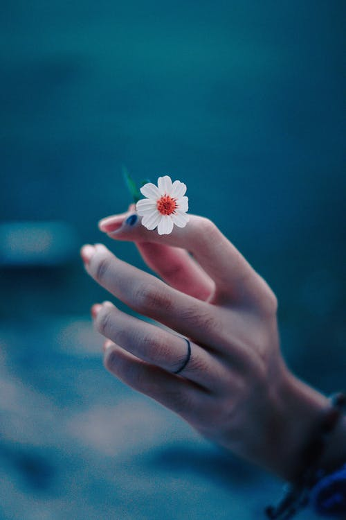 Photo of Person's Hand Holding a Tiny Flower