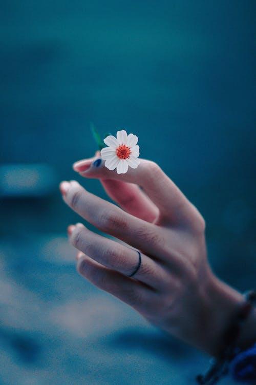 blomst, blomsterblad, fingre