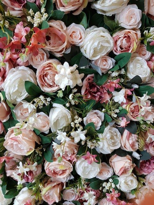 꽃, 장미의 무료 스톡 사진