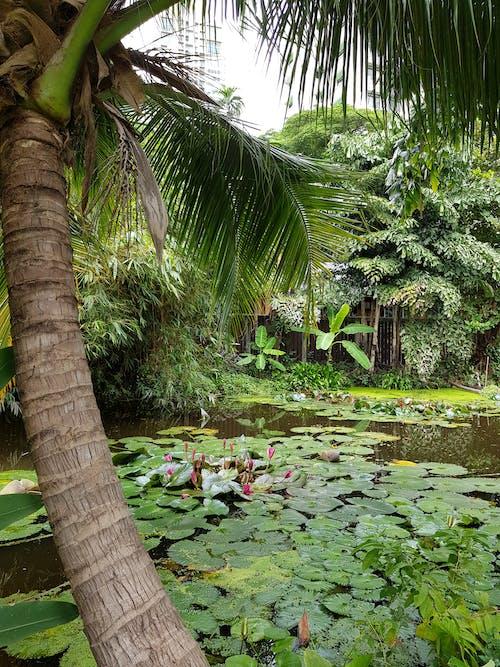 녹색 배경, 수련, 팜 트리의 무료 스톡 사진