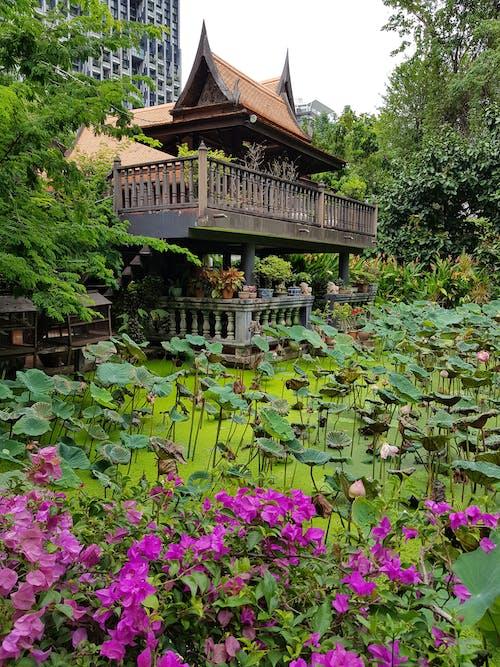불교 사원, 연꽃, 열대 식물, 전통의 무료 스톡 사진