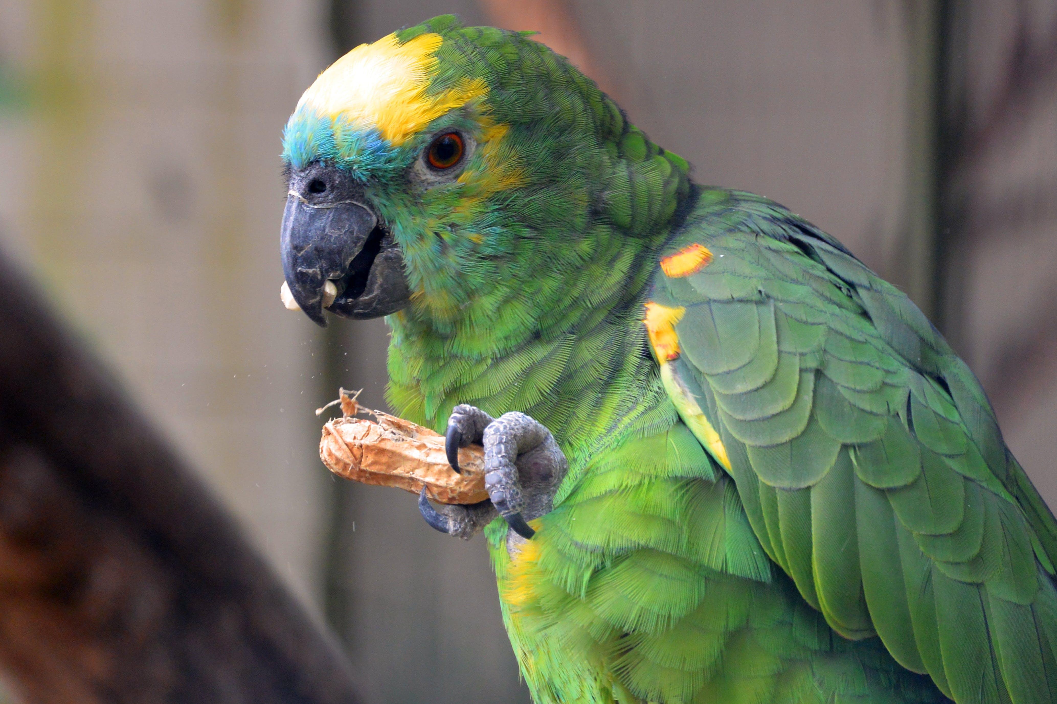 Free stock photo of nature, bird, yellow, animal