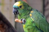 nature, bird, yellow