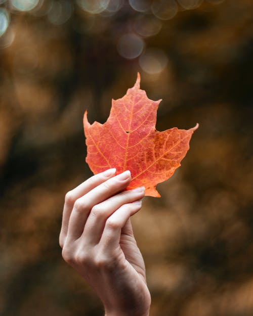 Free stock photo of autumn, fall, leaf, leaves