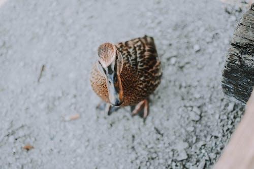 Ảnh lưu trữ miễn phí về bắn góc cao, cận cảnh, chim, chim nước