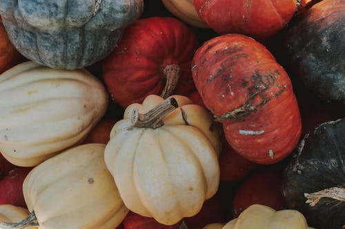White and Red Squash