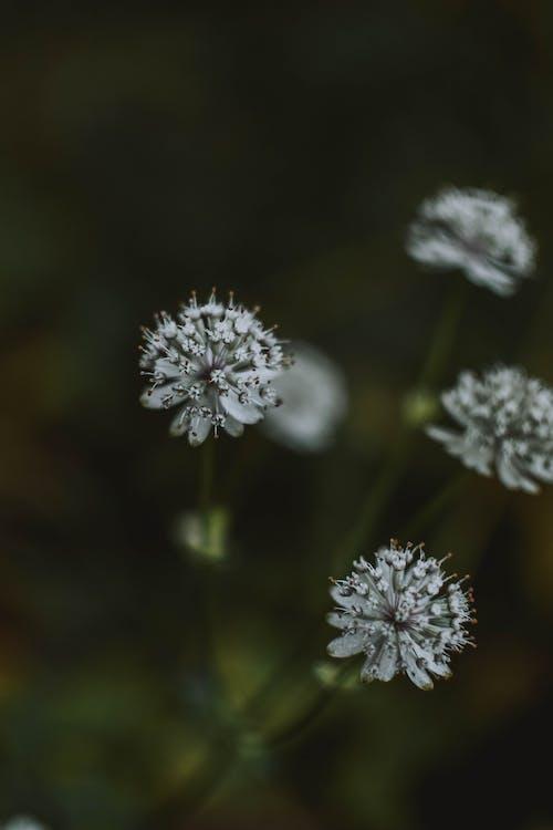 Gratis lagerfoto af blå blomster, blomstrende, dybde, flora
