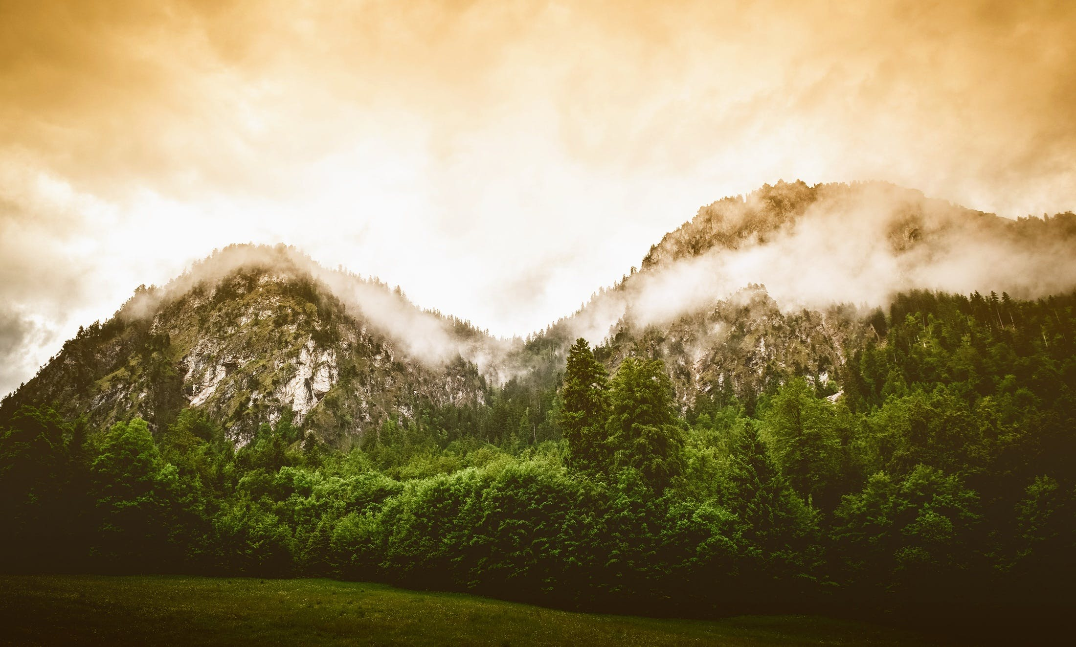 Kostenloses Stock Foto zu abend, baum, bäume, berg
