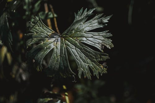 Close-Up Photo of Dark Green-Leafed Plant