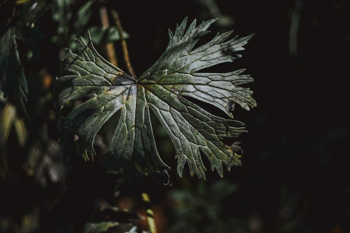 crecimiento, estampado, flora