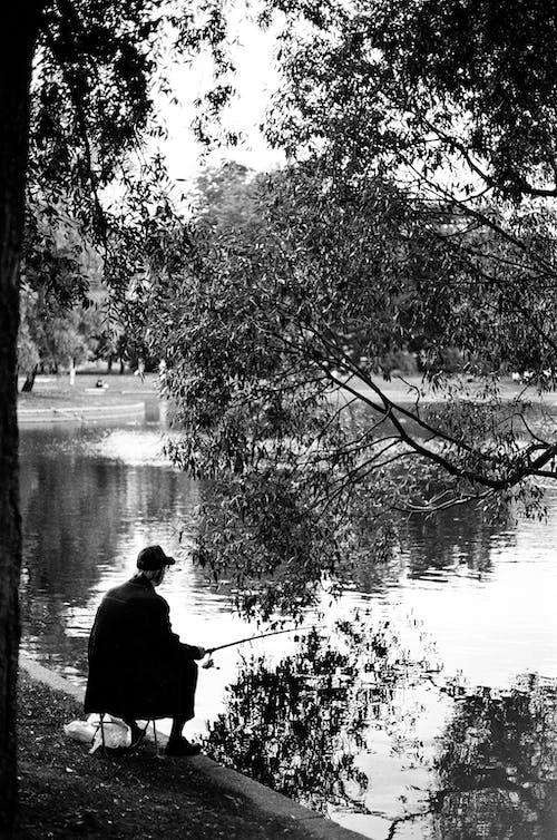 Δωρεάν στοκ φωτογραφιών με αλιεία, άνδρας, ασπρόμαυρο, δέντρο