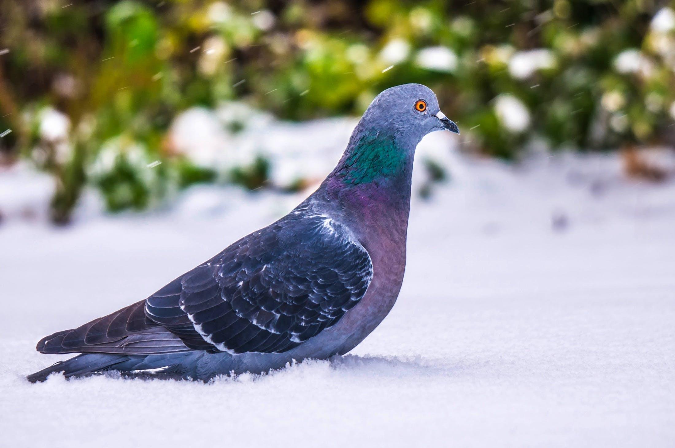 Free stock photo of beautiful, bird, closeup, country