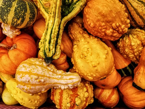 Free stock photo of autumn, fall, gourds