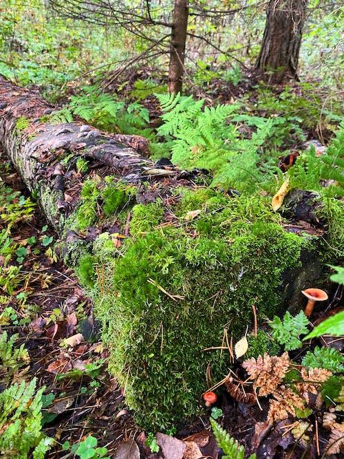 Free stock photo of moss