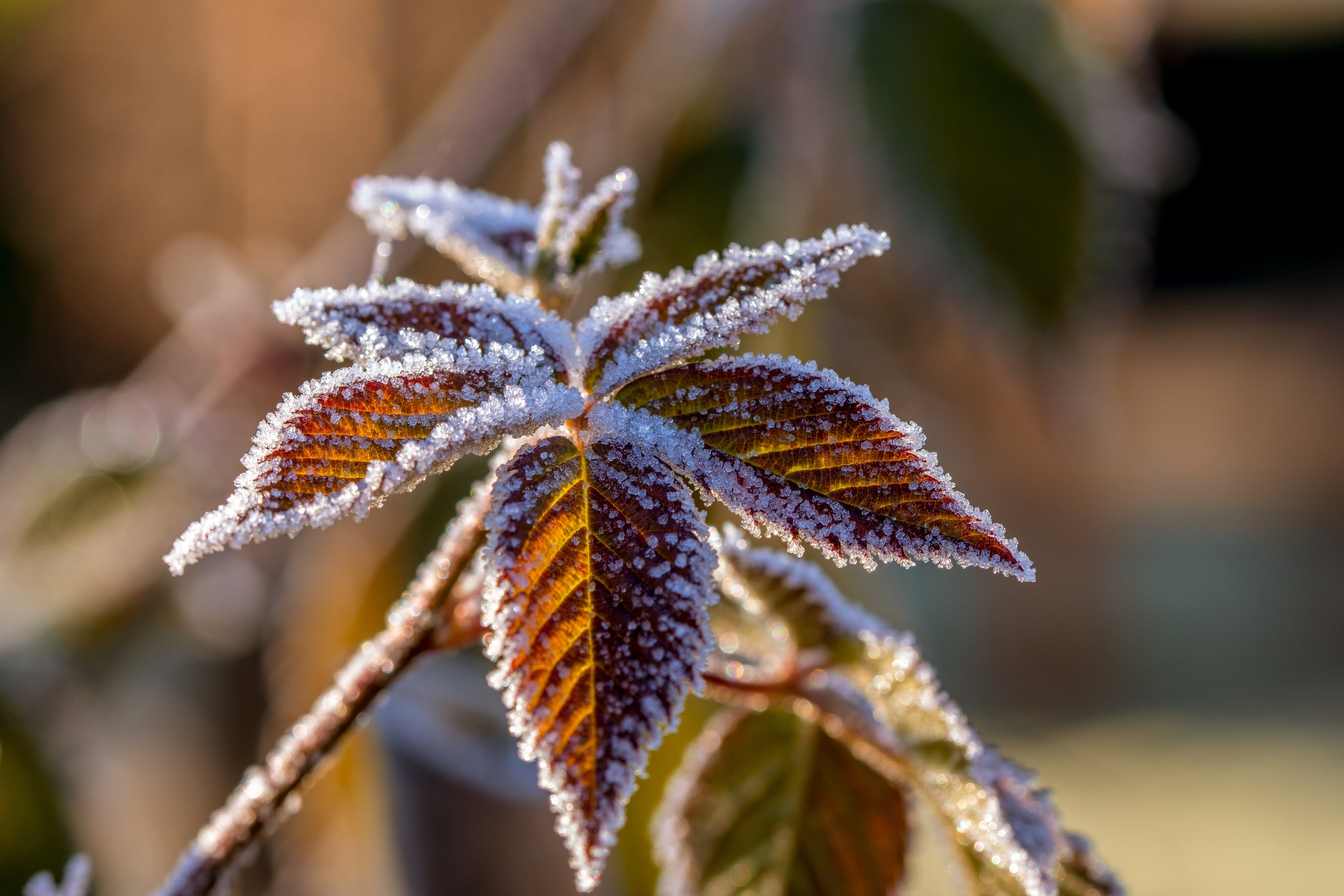 Free stock photo of cold, nature, winter, frozen