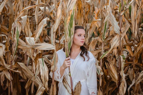 Woman Holding Corn on Cornfield