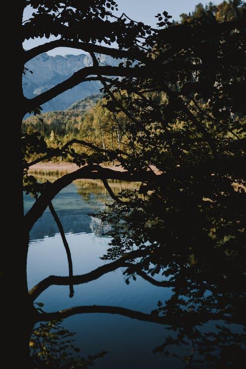 Kostnadsfri bild av grenar, gryning, kväll, landskap