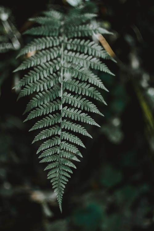 Darmowe zdjęcie z galerii z liść, liść palmy, orlica, paproć