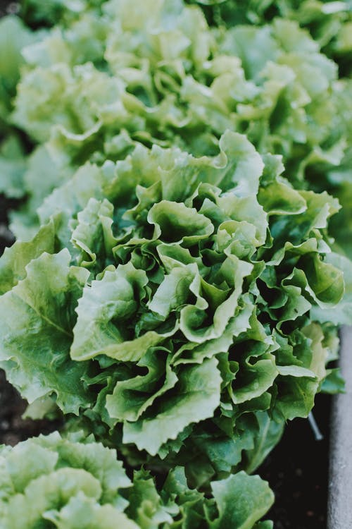 Close-up Photo of Green Vegetable