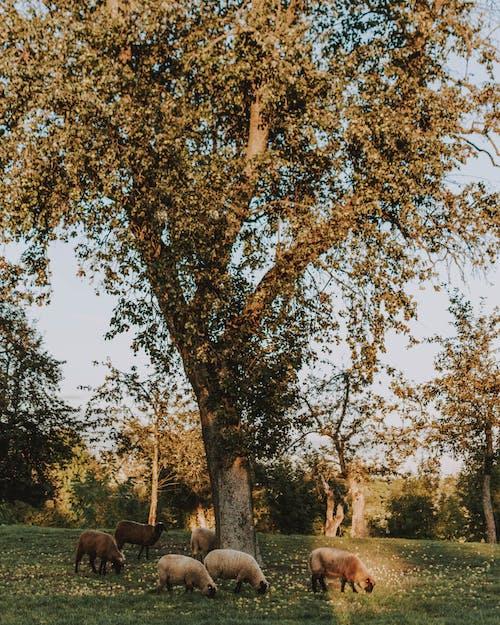 ağaç, arazi, çim, düşmek içeren Ücretsiz stok fotoğraf