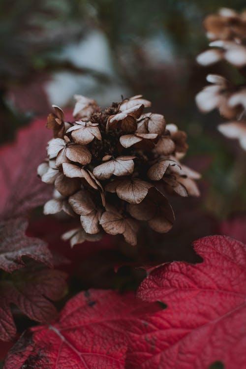 falla, färg, flora