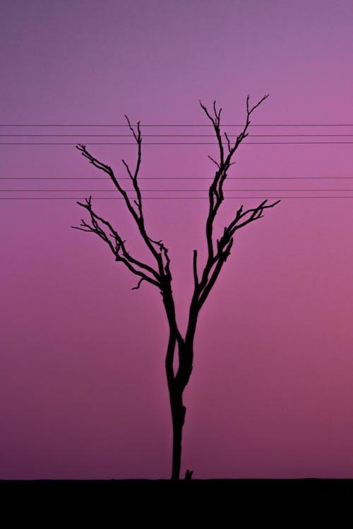 Fotobanka sbezplatnými fotkami na tému fotka, hmlistý, krása v prírode, purpurová obloha