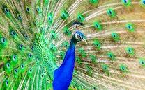 bird, animal, zoo