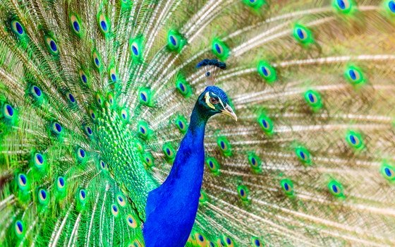 Free stock photo of bird, animal, zoo, colorful