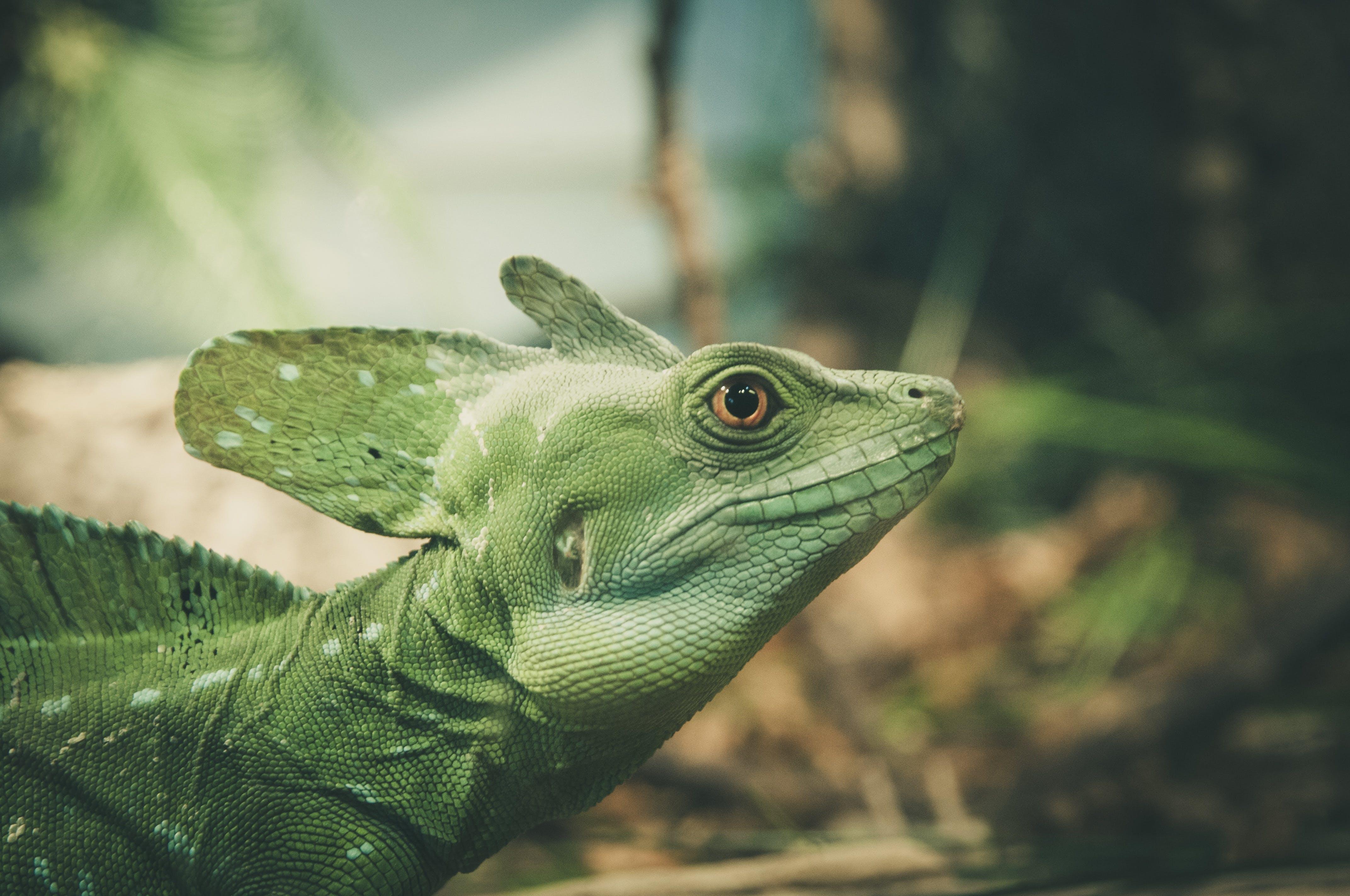 Foto stok gratis akrab, alam, berbayang, binatang