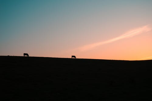 Silhouette Photo of Animals