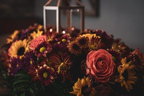 Foto stok gratis bunga-bunga, dekorasi, flora, jatuh
