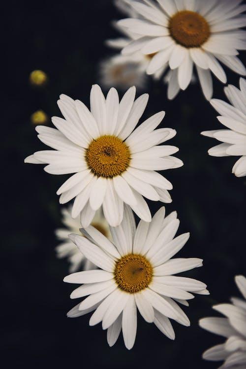 Ilmainen kuvapankkikuva tunnisteilla kasvikunta, kukat, kukinta, kukka
