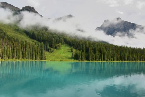 Lake Surrounded by Trees