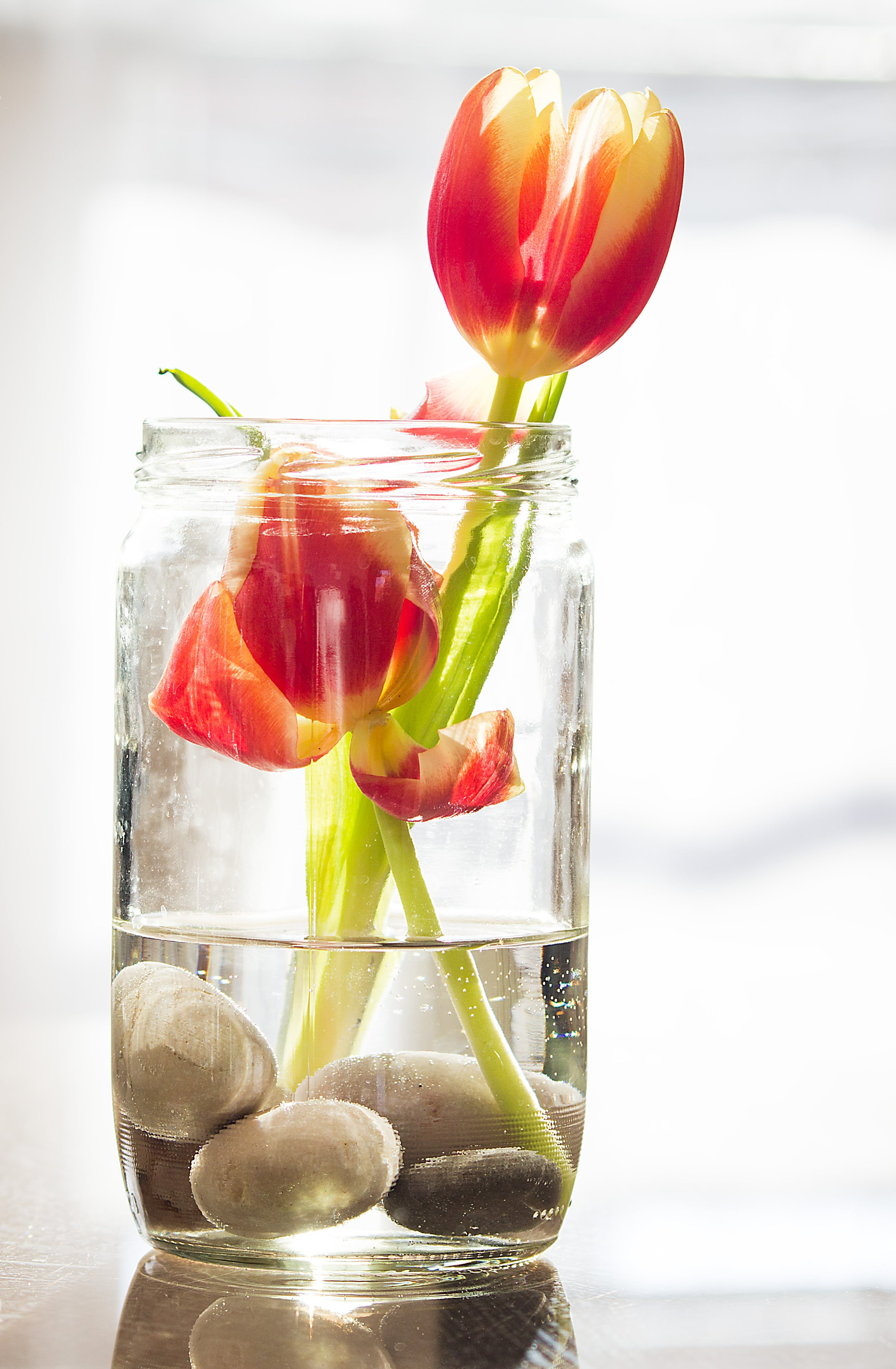 Two Red Flowers in of Glass Mason Jar