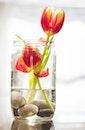 flowers, glass, plant