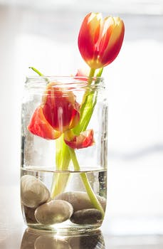 Red And Yellow Tulips In Clear Glass Jar And Vase Still Life Painting 183 Free Stock Photo
