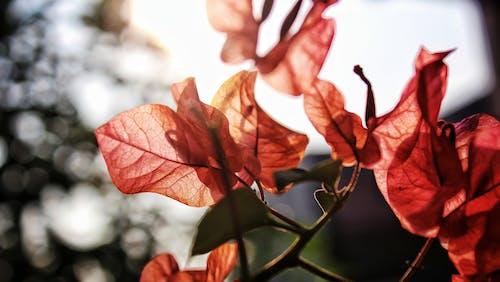 Ảnh lưu trữ miễn phí về ánh sáng mặt trời, hoa đẹp