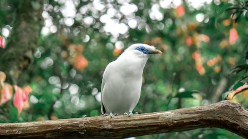 Ảnh lưu trữ miễn phí về chim, chim trắng, nền mờ
