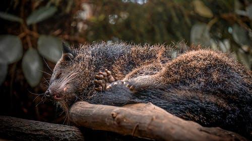 Ảnh lưu trữ miễn phí về con vật, ngủ