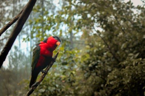 Ảnh lưu trữ miễn phí về chim, con vật