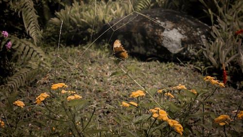 Ảnh lưu trữ miễn phí về bướm trên hoa, Con bướm