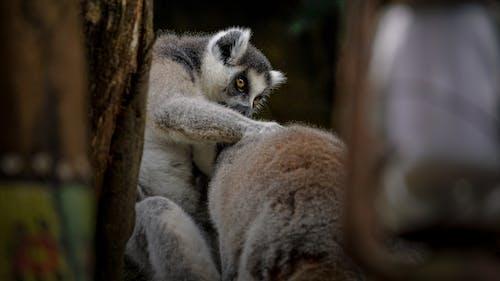 Ảnh lưu trữ miễn phí về chân dung con vật, chụp ảnh động vật, con vật