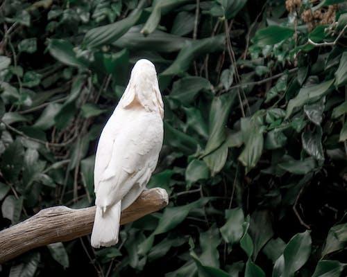 Ảnh lưu trữ miễn phí về chim, chim trắng, con vật, xem lại