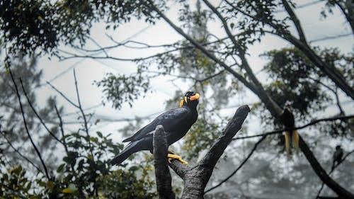 Ảnh lưu trữ miễn phí về chim, chụp ảnh động vật, con vật