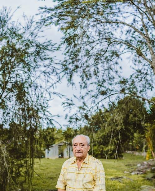 Foto d'estoc gratuïta de ancians, arbre, home, home de la tercera edat