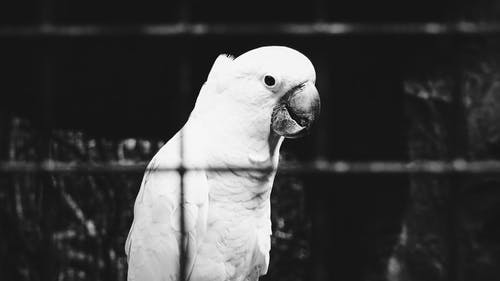 Ảnh lưu trữ miễn phí về chim, chụp ảnh động vật, con vật, con vẹt