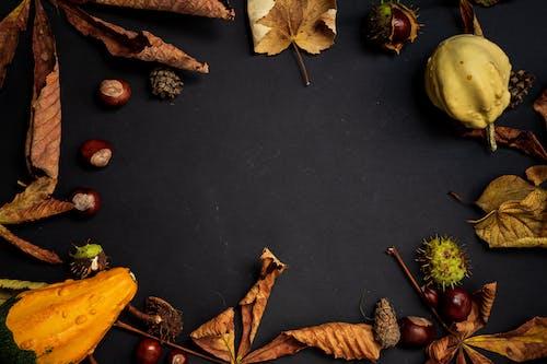 Foto stok gratis biji pohon ek, buah, Daun kering, gersang