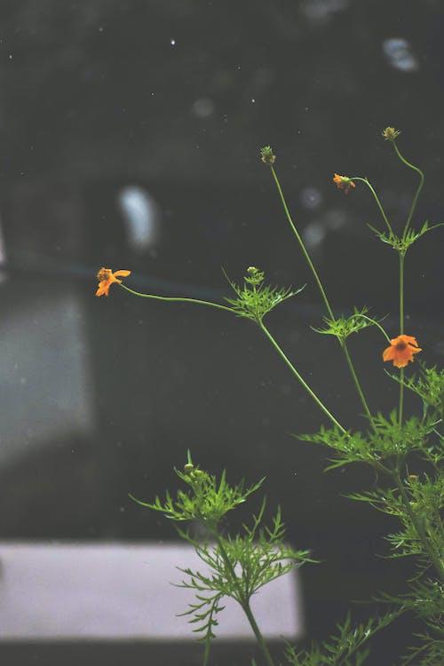 Fotobanka sbezplatnými fotkami na tému daždivý, nádherné kvety
